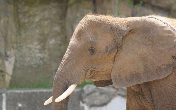 """Spécial """"TRUMP SON MONDE et le """"feuilleton"""" sur les éléphants.."""" - Image n° 1/3 !..."""