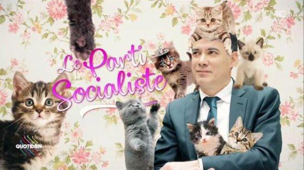 """Spécial """" Le PS déménage et adopte un chat..."""" - Image n° 2/3 !..."""