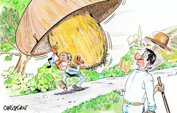 """Spécial """"La saison des champignons compromise par le manque de pluie..."""" - Image n° 2/2 !..."""