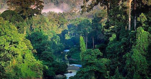 Notre vie est une jungle