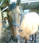 Photo de My-Horse-Leo