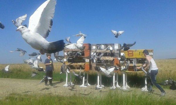 Bonjour le siège  de petite forêt organise jeudi 21 juillet   matin entraînement  sur morlincout   lâché  a partir  de 7h ou 7h30    enlogement  mercredi  de 17h 30  a19h 30   0.40 ctm part pigeons  pouvez vous me dire combien de pigeons allez  vous mettre merci