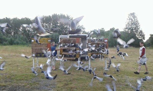 Morlincout lâché  7h 55  294 pigeon