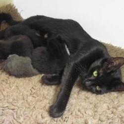 Elle mène son sauveur à ses bébéd