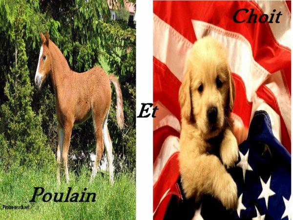 Choit et Poulain