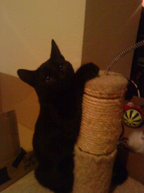 mon chat que j'ai perdu il y a maintenant 5 jours