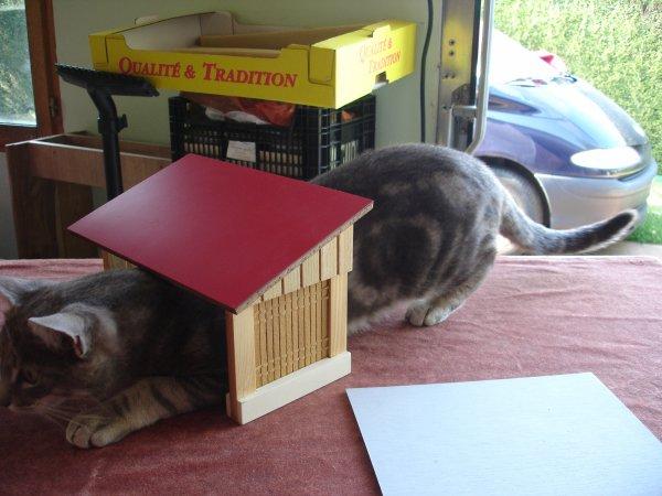 Une petite photo pour montrer l'activité de mon chat !!