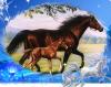 chevaux-folie