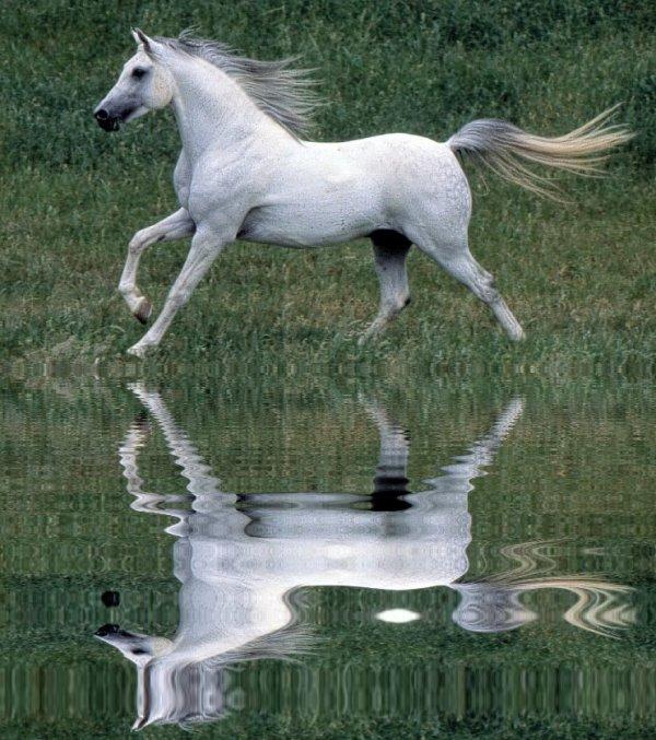 Effet reflet dans l' eau