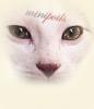 MiniPoils