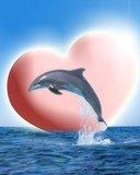 en amourreux c'est trop baeu au bord de la mére avec les dauphain vous trové pas