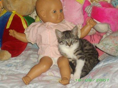 voila ma chate elle s'appel chipie la cetais quand elle etais bébé