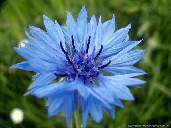 Fleur de mai