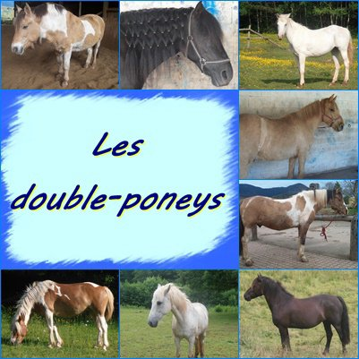 Les double-poneys !