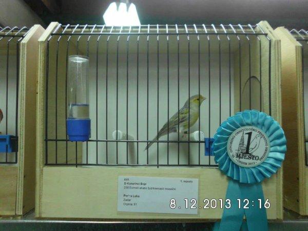 agata eumo yellow mosaic champion of croatia