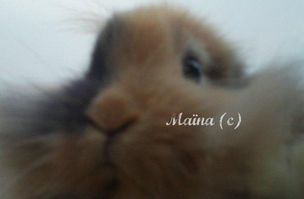 Carte d'identité du lapin :B