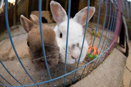 Sommaire Sur les sports des lapins (si on peut appeler ça comme ça)