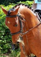 Ma vie, Ma passion, Mon monde, L'équitation <3