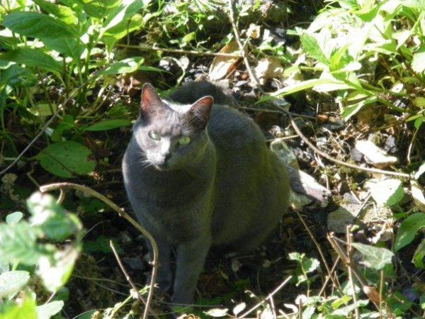 Poème sur Les Chats : Baudelaire dans Les Fleurs du mal