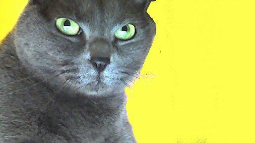 Le Chat II Baudelaire : Les Fleurs du mal