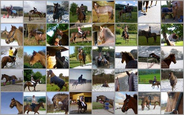 """"""" Si vous voulez qu'il vous aime , ayez au moins la politesse de ne pas charger vos problème sur son dos. On ne peut pas tricher avec un cheval. Des éperons ? Vous avez l'intention d'etre plus fort que lui ? Un cheval qui veut vous virer vous vire, éperons ou pas. Ca fait 10 000 ans que les humains tentent de dresser les chevaux, 10 000 ans qu'on tombe, 10 000 ans qu'on se relève, qu'on invente les voitures, qu'on invente les avions et que pourtant on continu de monter à cheval, vous savez pourquoi ? Le pas espagnol , tango du cheval. Vous aviez le temps de le monter mais vous n'avez pas le temps de le marcher ? Vous aviez le temps d'enseigner mais vous n'avez pas le temps de dresser ? On ne renonce jamais aux chevaux, jamais. De toutes facon les chevaux ont le meme problème que les hommes, ils meurent. Pied à terre, carresser, feliciter. Se contenter de peu et jouir. Deux étalons Face à Face. Un cheval se sert de tout ce qu'il a appris. Ce n'es pas le but qui compte, c'est le chemin. """""""