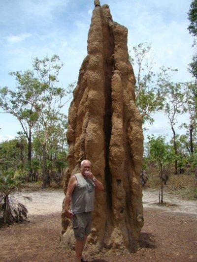 Une termitière immense