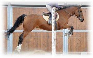 Équitation (n.f.) : Action et art de monter à cheval.