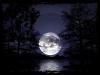 Amis de Pleine Lune - Chapitre 1 : La rencontre de deux louves