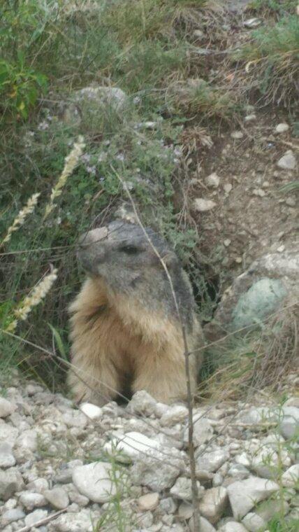 A l hôtel et petite visite aux marmottes