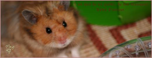 Lui, le meilleur hamster, qui a fait chavirer mon Coeur : Totor, Mon ange ..♥