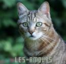 Photo de Les-Amours