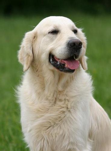 Le chien et son odorat