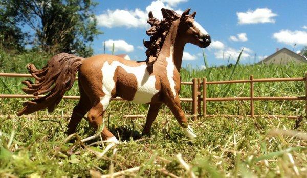 Un cheval inquiétant