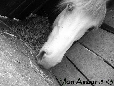 [ Le Pluu Importan a Mes Yeux ... ♥♥ ]