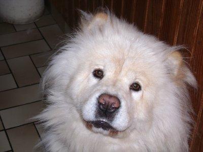 Mon chien que j'ai perdu le 15 Juillet 2011 agée de 5 ans ...