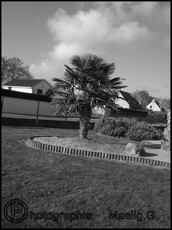 Photographie n°1