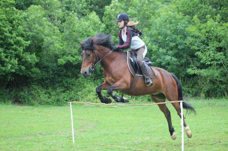 Quand tu vas sauter, n'essaye pas d'apprendre au cheval ce qu'il doit faire, mais utilise ta sensibilité pour qu'il t'aprenne comment faire.
