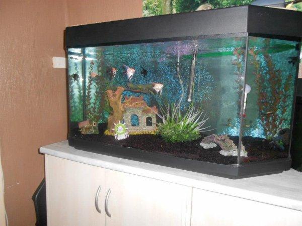 Une des passions de Laurent : l'Aquariophilie