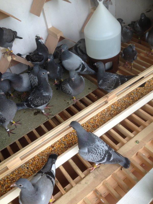 Pigeonnier terminé