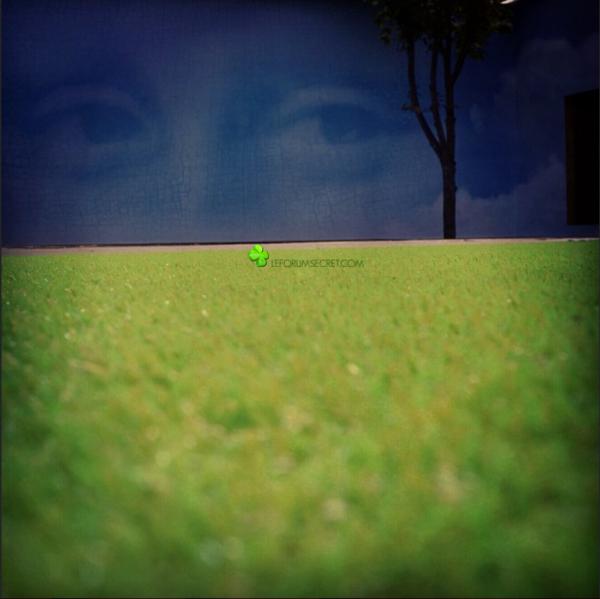 """Une nouvelle photo du jardin avec le gazon ! """"Des regards qui vous suivent, où que vous soyez !"""""""