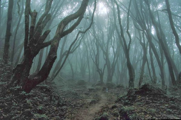 Hors-Série n°5 : La forêt Aokigahara.