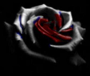les rose noire et rouge