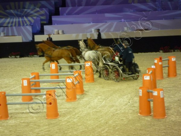Salon du Cheval 2010