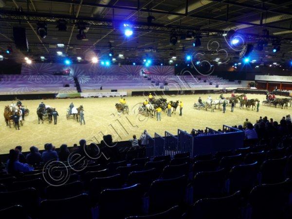 Salon du Cheval 2010 (Suite)