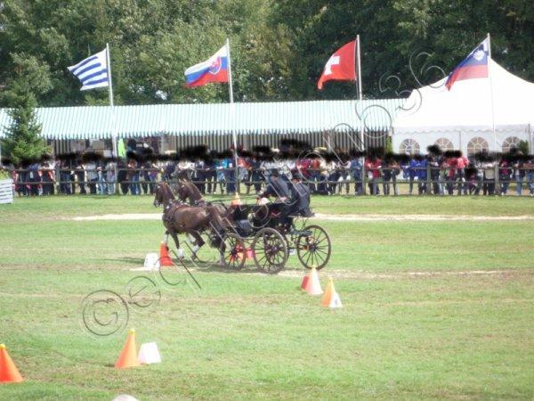 Championnat du Monde d'Attelage 2011