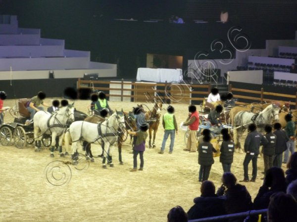Salon du Cheval 2011