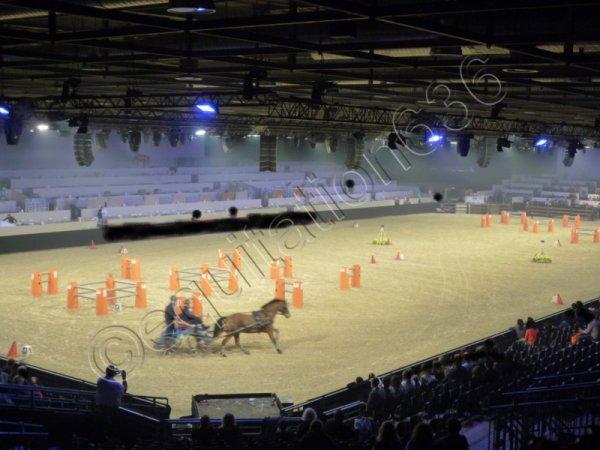 Salon du Cheval 2011