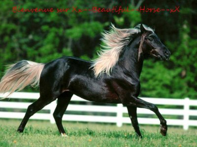 Bienvenue sur Xx--Beautiful--Horse--xX