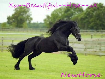 Newhorse