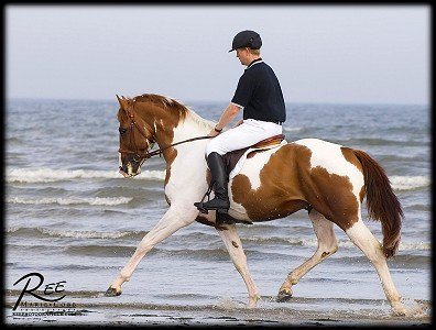 Si quelqu'un te dit ce n'est qu'un cheval, contente-toi de sourire, il ne peut pas comprendre :)